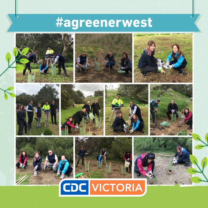 CDC Victoria Staff Participate In One Of The Biggest Planting Events